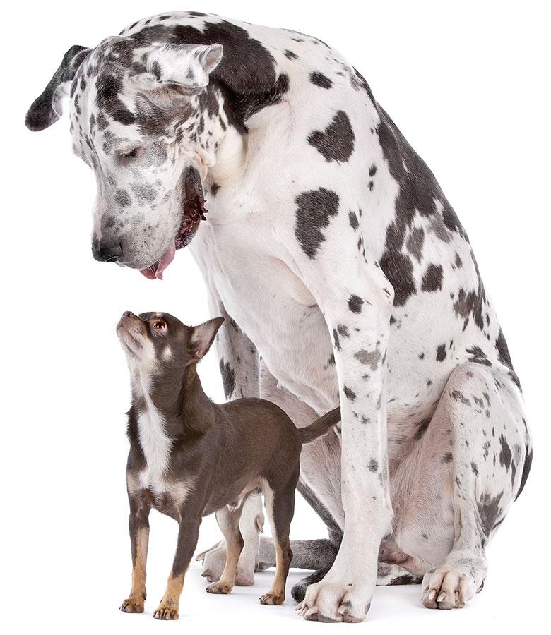 Les plus grands et les plus petits chiens