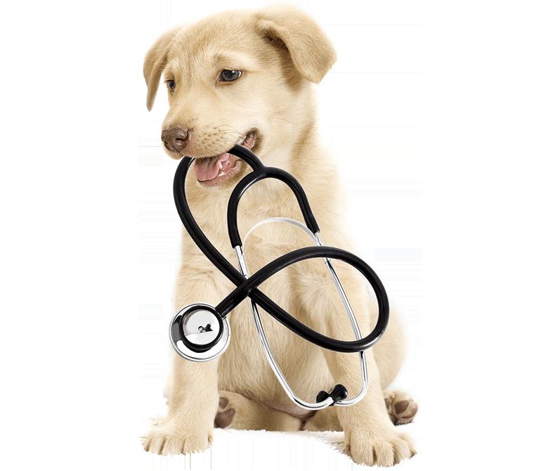 assurance du chien