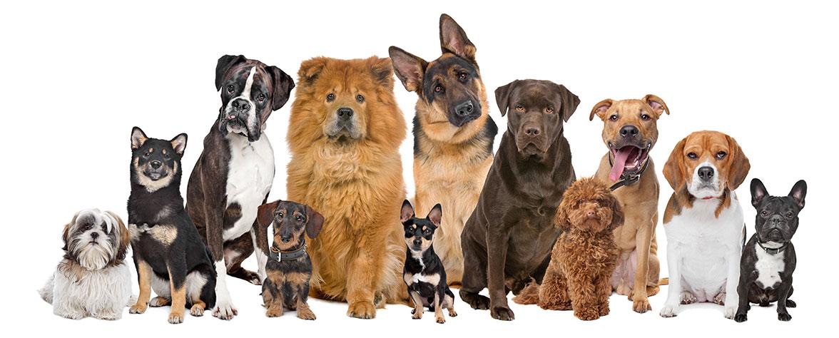 Les chiens du monde