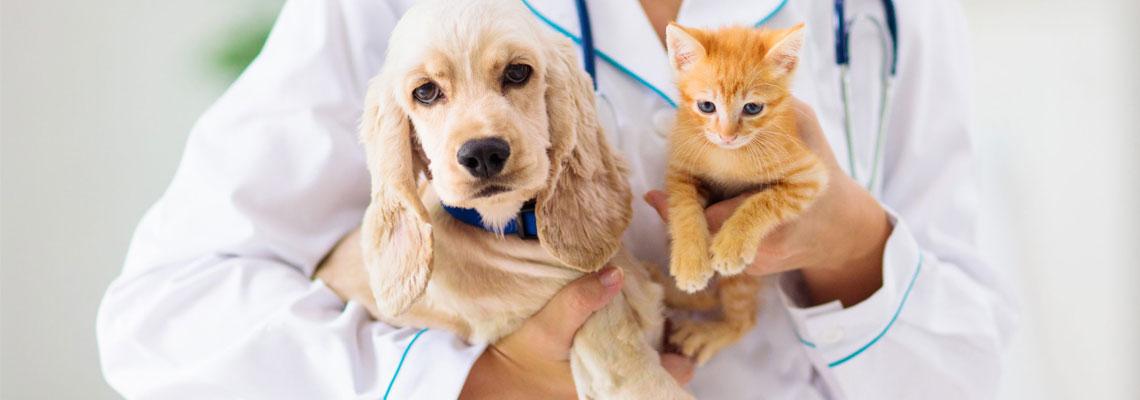 Spécialiste en ligne pour une urgence vétérinaire